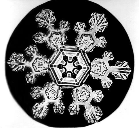 Macro d'un flocon de neige photographié par Winston Bentley au 19e siècle.