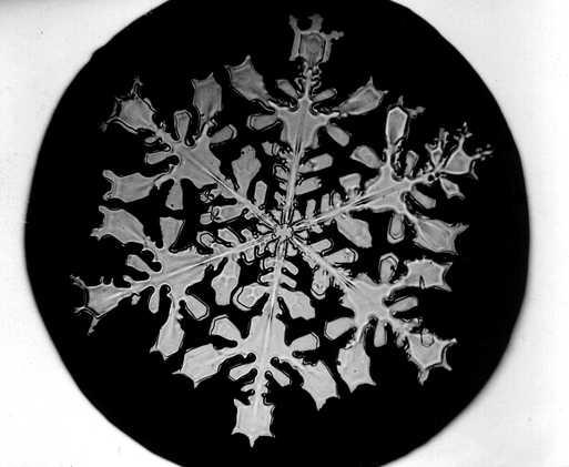 Flocon de neige ressemblant à une feuille morte photographié par W. Bentley au 19e siècle.